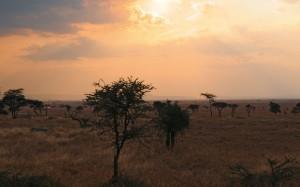 safari-dik-dik---extension-sur-la-cote-kenyane---departs-2015-34944952-1422960078-ImageGalleryLightbox